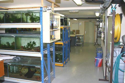 Aquariums de la salle d'activité