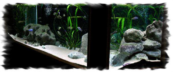 Aquarium de 3000 litres pour les Cichlidés du lac Malawi
