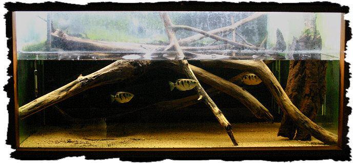 L'aquarium abritant la mangrove