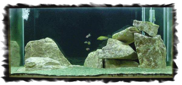 Aquarium Victoria