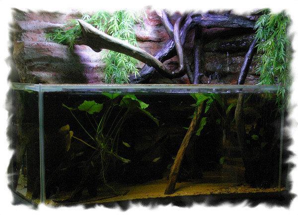 Aquaterrarium du club aquariophile de Vernon