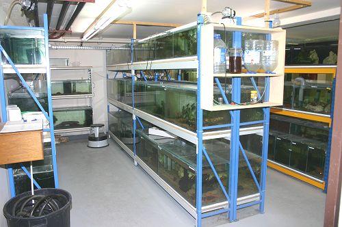 Batteries d'aquariums de la salle d'activité
